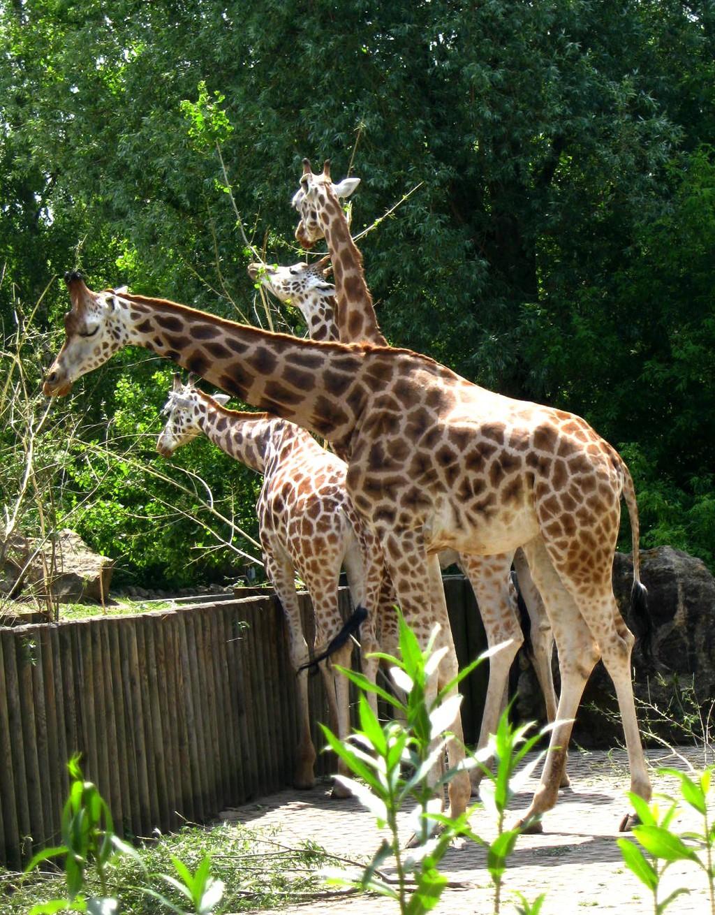 Zoo Opole in Opole, Polen | Zoover