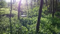 Appartement Aan Het Grote Bos