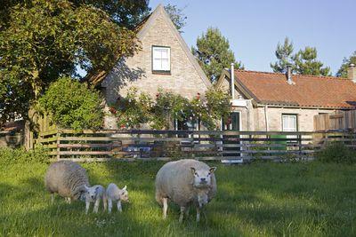 Vakantiehuis Beppe van Ameland