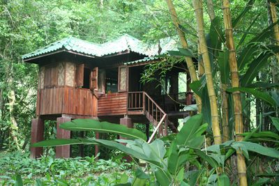 Bungalow Our Jungle House