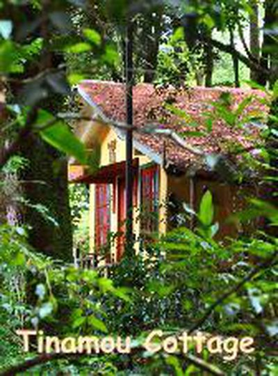 Lodge Jungle Lodge Tinamou Cottage