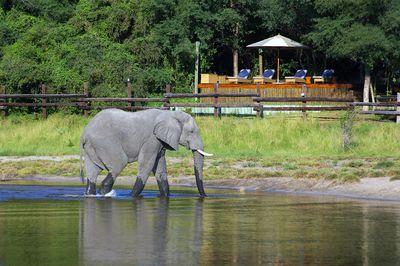 Hotel Savute Safari Lodge