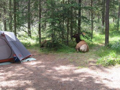 Camping Wapiti Campground