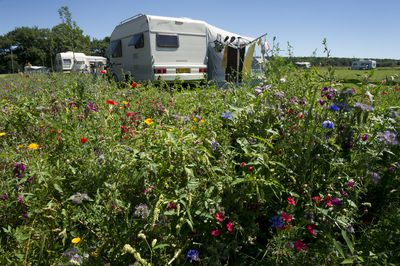 Camping Boerderijcamping Heuvelland Oaze