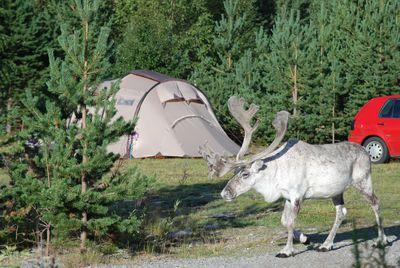 Camping Sörälvens Fiske