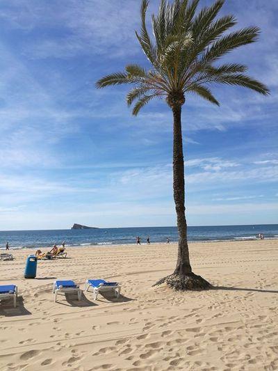 Hostel Alicante