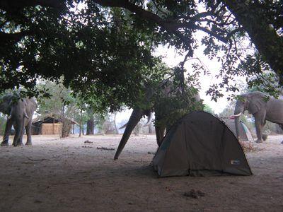 Camping Flatdogs Camp