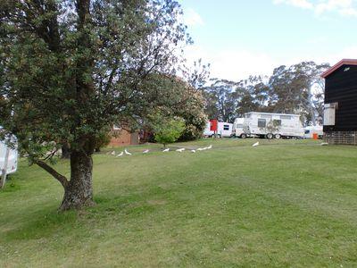 Camping Katoomba Falls Caravan Park