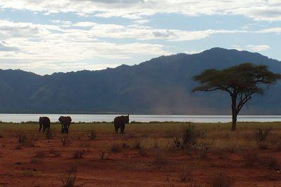 Vakantiehuis Lake Jipe Bandas