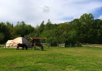 Camping Minicamping-Ezelcamping In 't Niet