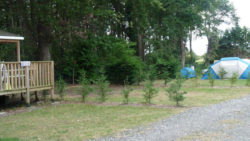 Camping Chant des Oiseaux