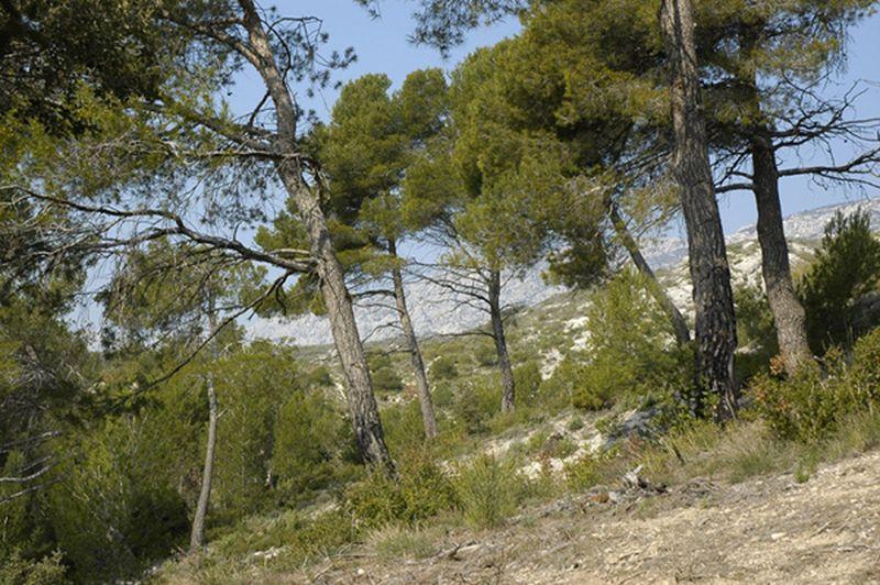 Camping Municipal Le Cezanne