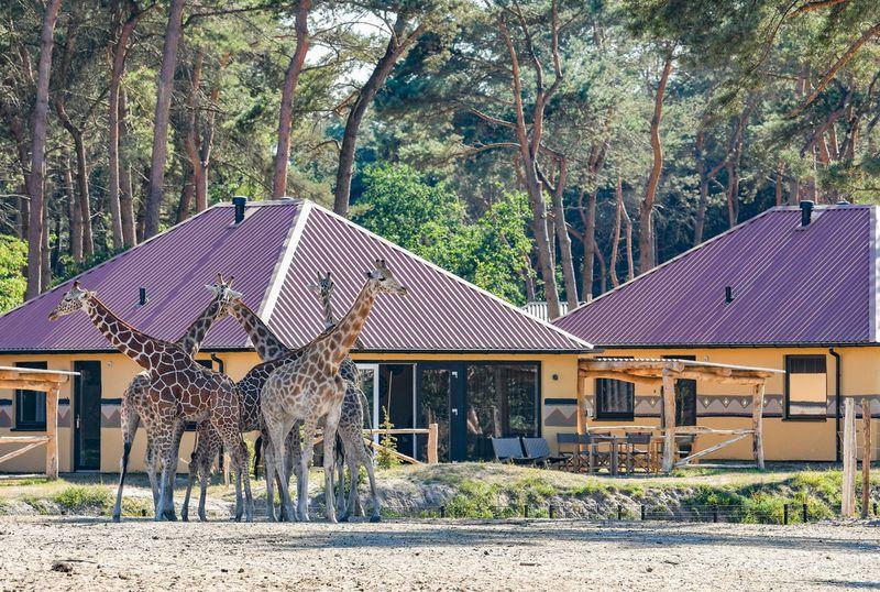 Beekse Bergen Zwembad.Vakantiepark Safari Resort Beekse Bergen In Hilvarenbeek Nederland