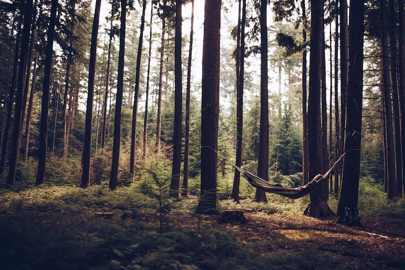 Camping in de Rimboe