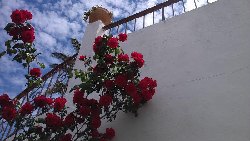 Hotel Club Cala Azul
